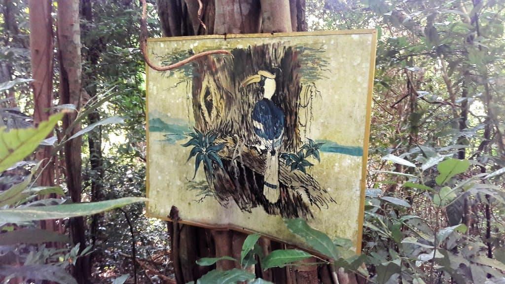 hornbill island hike