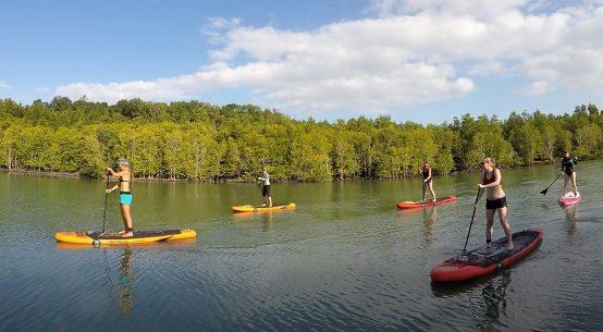 Phuket mangrove SUP tour
