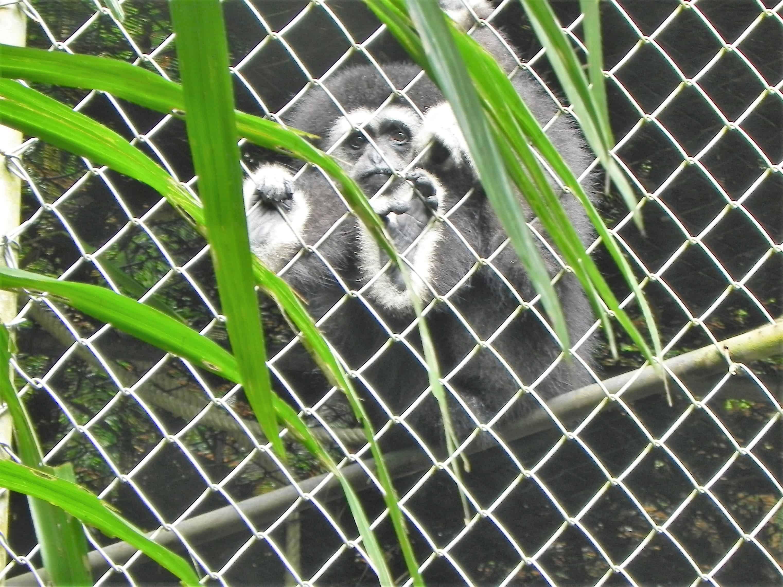 gibbon shelter phuket